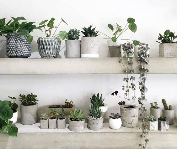 Verde domestico le piante che migliorano la qualità della casa