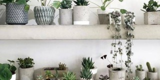 Verde domestico: le piante migliorano la qualità della casa